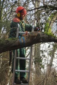 Gunter Freitag entfernt morsches Totholz aus dem alten Apfelbaum